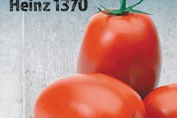 hoby seeds 1338