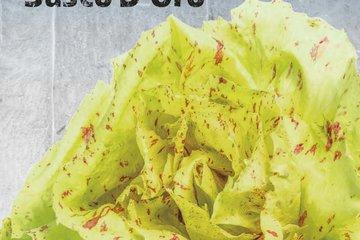 hoby seeds 1349