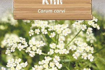 seeds of herbs 1359