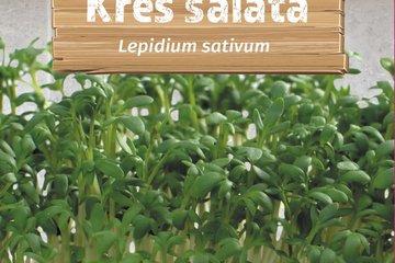 seeds of herbs 1362