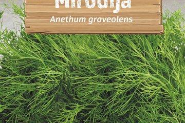 seeds of herbs 1369
