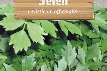 seeds of herbs 1373