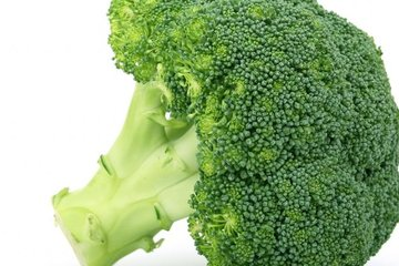 brokoli 1384