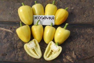 kosovka 1459
