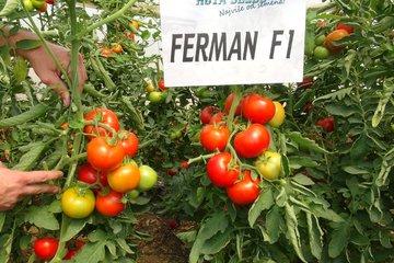 ferman f1 1486