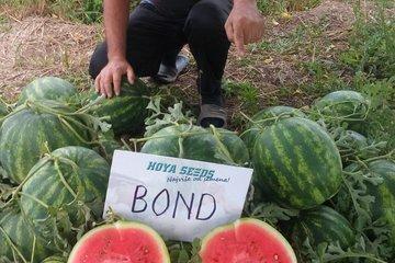 bond f1 1525
