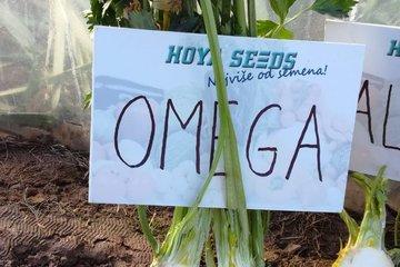 omega 1624