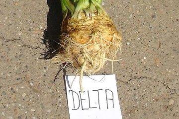 delta 1630
