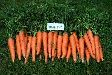 bentley f1 1669