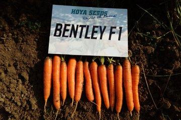 bentley f1 1671
