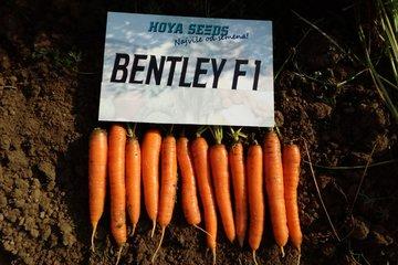 bentley f1 1672
