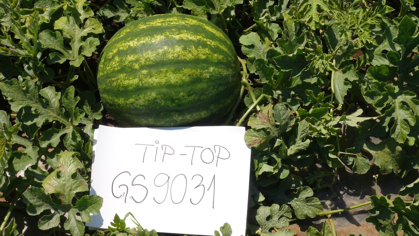 TIP_TOP_1