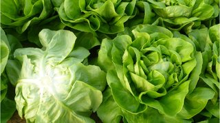 aktuelno salate genesis i domiziana