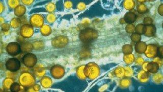italpollina korisni mikroorganizmi
