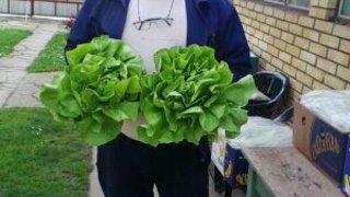 ogled salata