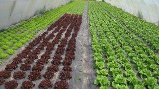 pilirano seme svih vrsta egzoticnih salata