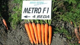 dani povrca mrkva