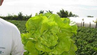 letnja salata sotalis