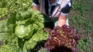 salate david i oakly