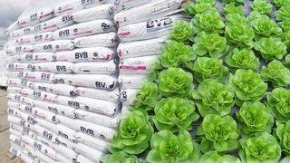 bvb substrati i salata genesis