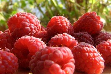 18443raspberries_2