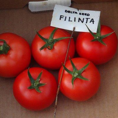 filinta f1