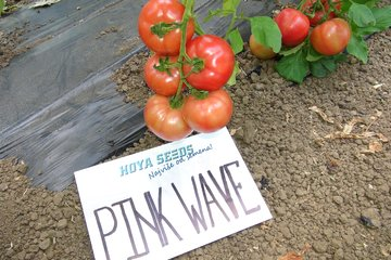 pink wave f1 4046