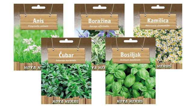 hobi seme zacinskog i lekovitog bilja