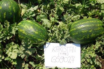 karistan type f1 4256