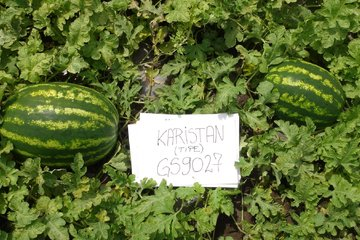 karistan type f1 4257