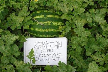 karistan type f1 4258