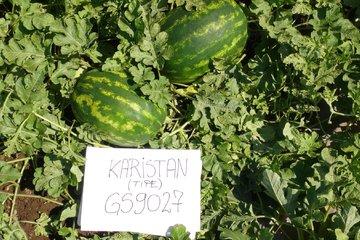 karistan type f1 4259