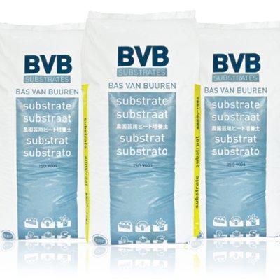 bvb seedling