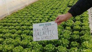salata galactic