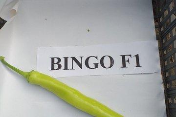 bingo 4945