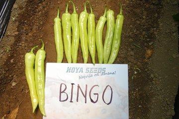 bingo 4949