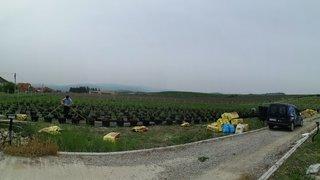 sadnja borovnica u vladicinom hanu