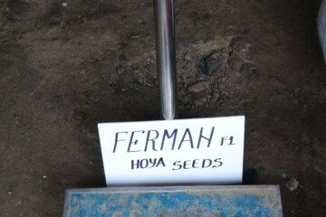 Ferman_F1_(23)