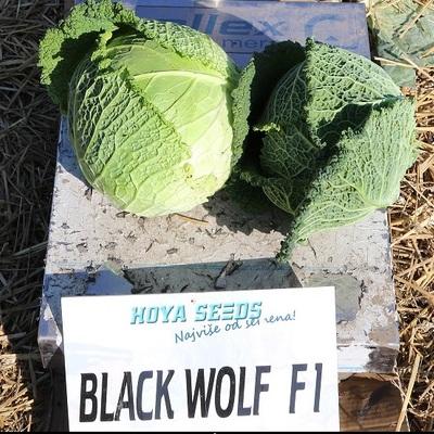 black wolf f1