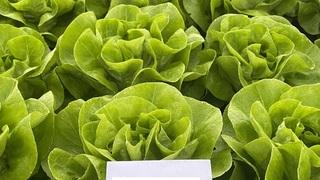 stizu nove salate