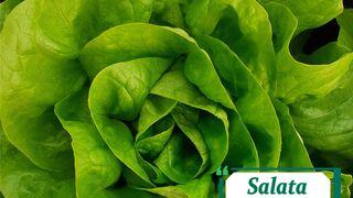 salad campito