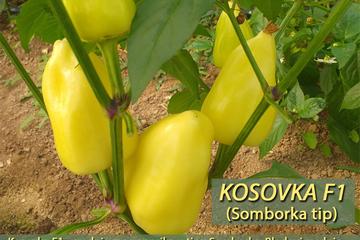 Kosovka_F1