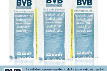 bvb tray